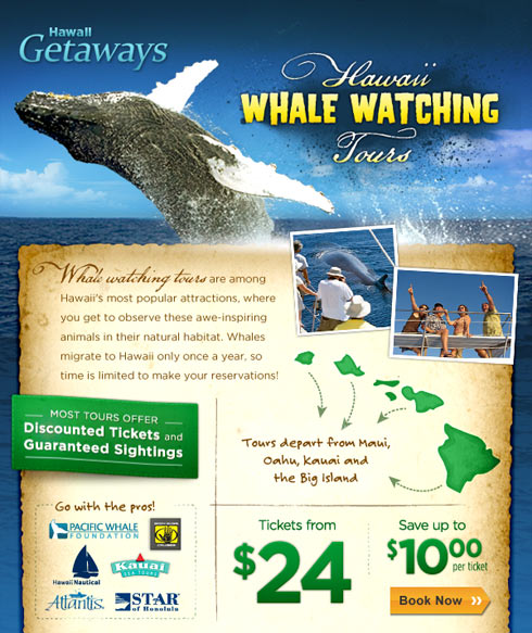 Hawaii Whale Watching Tours email promotion